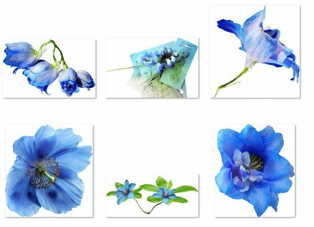 Синие цветки роз