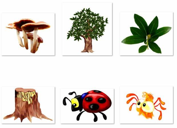 Пень и грибы