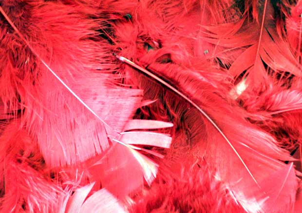 Красные перья