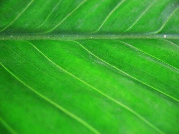 Свежий лист растения
