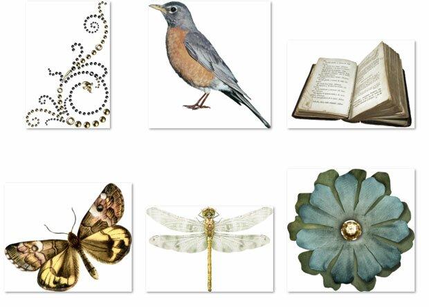 Старые книги, насекомые и птица