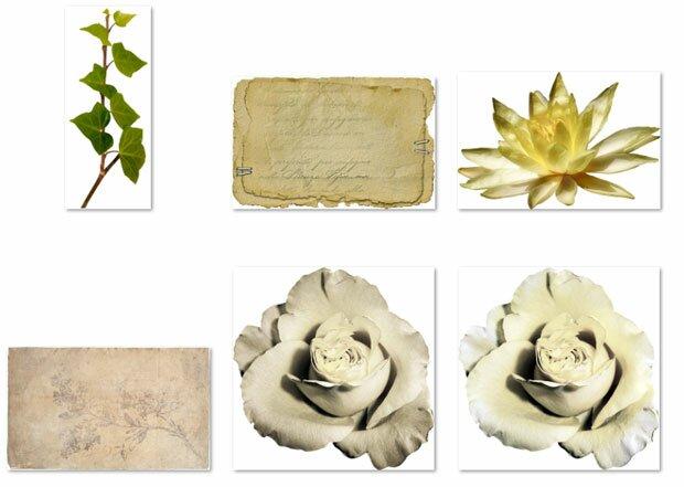 Старое письмо и розы