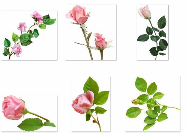 Розы с шипами