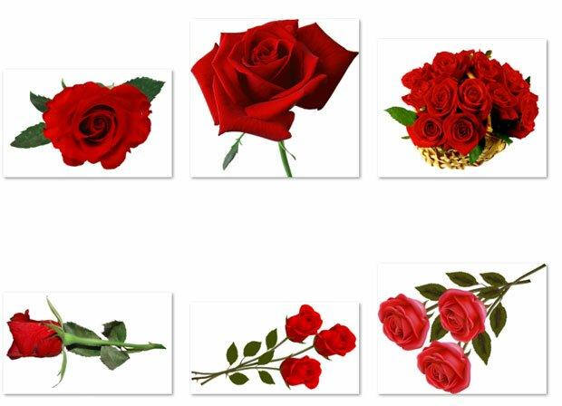 Картинки красных роз