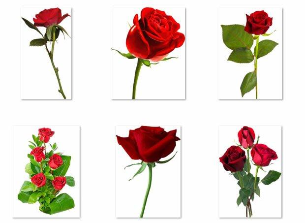 Розы растут