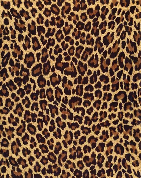 Шкура леопарда