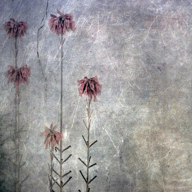 Увядшие цветы на мрачном фоне