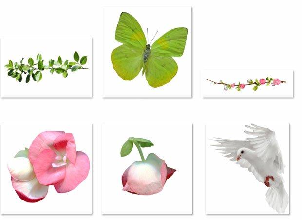 Белый голубь и зеленый росток