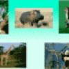 Животные из разных стран - презентация