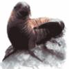 Морские млекопитающие в мире - презентация