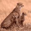 Животные саванны - презентация