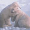 Что делают животные - презентация