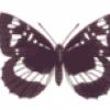Бабочки такие разные - презентация