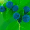 Ягоды в лесу - презентация