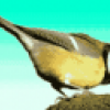 Птицы - презентация