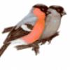 Лесные птицы - презентация