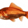 Рыба на рыбалке - презентация