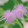 Цветы вокруг нас - презентация
