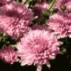 Цветы как они растут - презентация