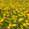 Цветок чудесное превращение - презентация