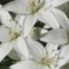 Цветы растут в саду - презентация