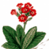Цветы как природные сокровища - презентация