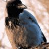 Птицы, чем они питаются - презентация