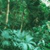 Тропический лес - презентация