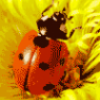 Класс насекомые - презентация