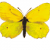 Насекомые жучки и бабочки - презентация