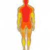 Части тела у человека - презентация