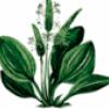 Растения средней полосы - презентация