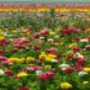 Многообразие растений - презентация