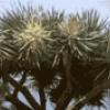 Tree дерево - презентация