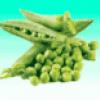 Овощи с грядки - презентация