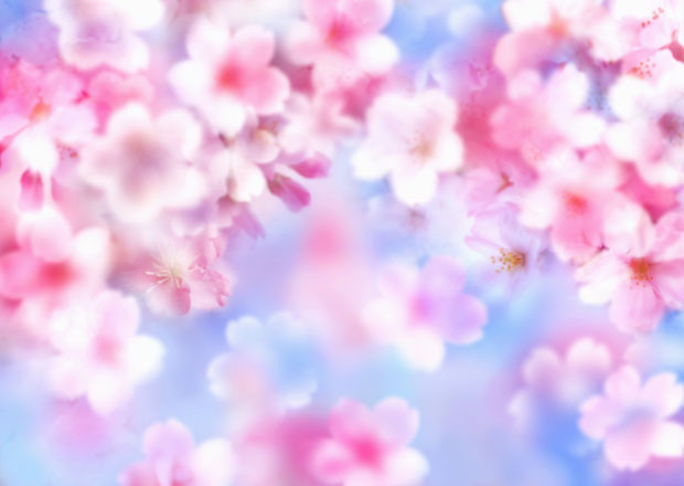Цветут розовые цветы