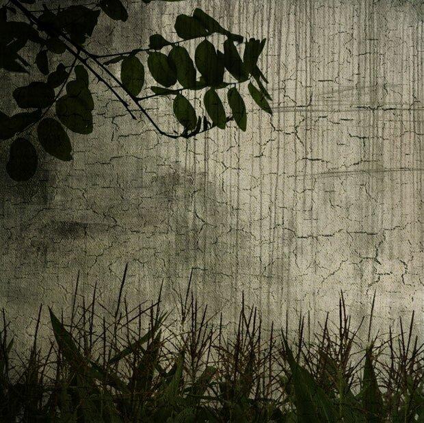 Трава и листья на темном фоне