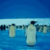 Все о пингвинах - презентация