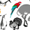 Птицы для самых маленьких - презентация