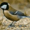 Птицы вокруг нас - презентация