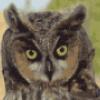 Совы ночные птицы - презентация