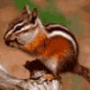 Животные грызуны - презентация