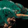 Рептилии - презентация
