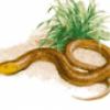 Рептилии ящерицы - презентация