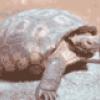 Черепахи - презентация