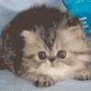 Кошки, семейство - презентация