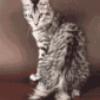 Кошки, живущие у человека - презентация