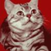 Кошки как домашние питомцы - презентация