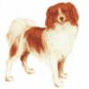 Породы собак - презентация