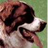 Породы собак служебные - презентация